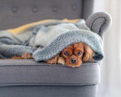 Separační úzkost u psů